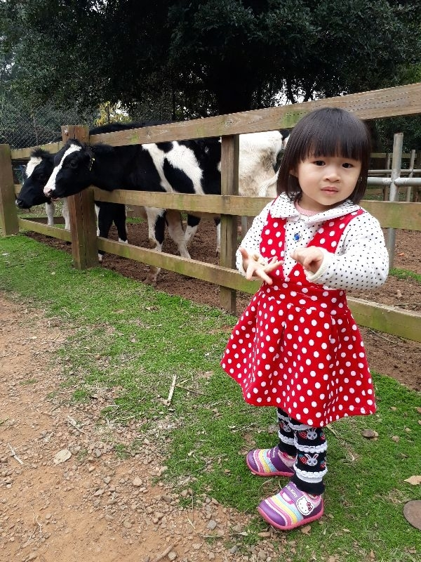 大年初一看牛牛走春 #萌娃