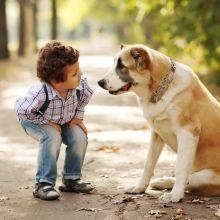 寵物死亡時非常痛苦~要如何跨過失去寵物時的悲傷?