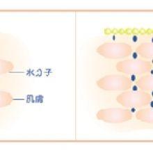 懷孕媽咪的肌膚變化及保養建議—預防乾燥細紋、注重成分安全
