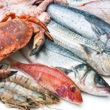 中秋烤肉 小心吳郭魚含抗生素