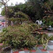 颱風豪雨過後 3招防傳染病上身