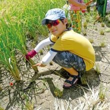 朱慧芳─孩子種稻,就懂得好好吃飯