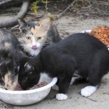 CDC:野貓可能使更多人暴露於狂犬病之中