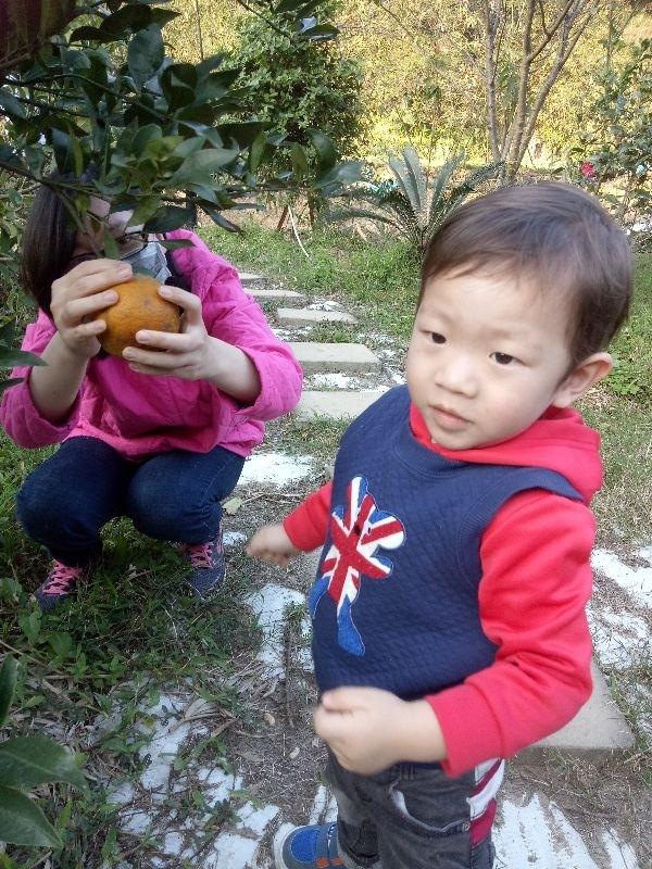 初四觀音山遊,順道去親戚家採橘子 #親子旅遊