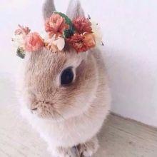 夢到兔子在跑的話,金錢運UP(驚)?!夢境占卜check♪【動物別】