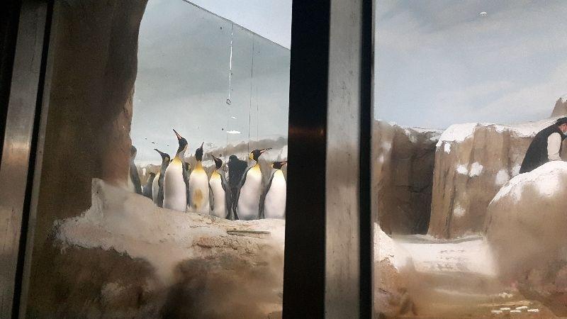 過年小孩就愛去動物園看動物,坐遊園車逛一圈,像看企鵝等等,好可愛,雖然去哪裡都是人擠人,但一家人在一起活動很幸福。 #親子旅遊