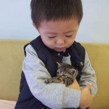 與貓咪、狗狗在一起的懷孕時光