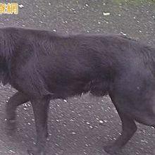 防範狂犬病威脅 野外活動勿接觸野生動物