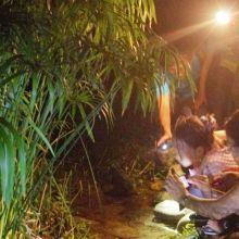 今天開始報名!花蓮親子夜探「蛙蛙新樂園」