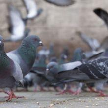 趕鴿、防墜雙效合一!用隱形鐵窗輕鬆解決鴿害困擾