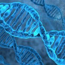 你是哪種類型?〈以遺傳基因(DNA)區分〉有效減肥法☆
