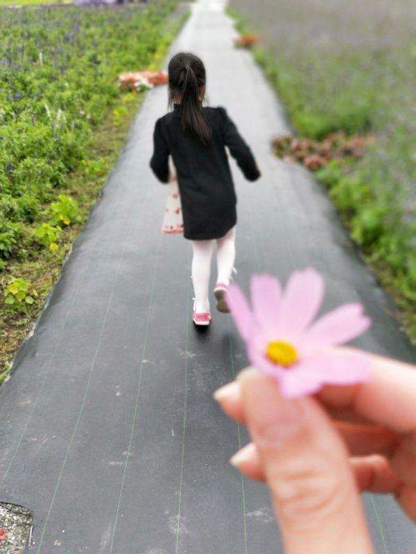 女兒送的花! 醬我怎麼好意思責備他,去偷摘別人種的花~哈哈哈