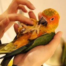 享受和可愛鳥兒們的相處時光♡淺草「有鳥的咖啡店」的4個秘密♪