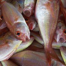 你知道買魚要看魚頭及魚尾嗎?7祕訣教給你