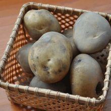 紅磘農場-有機黃金馬鈴薯。胡蘿蔔