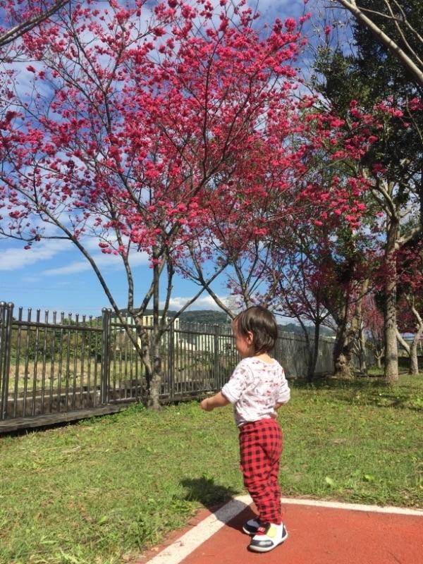 大年初四出遊玩~泰安國小運動場很適合小朋友跑跳~旁邊的櫻花也很美唷 #親子旅遊 😍