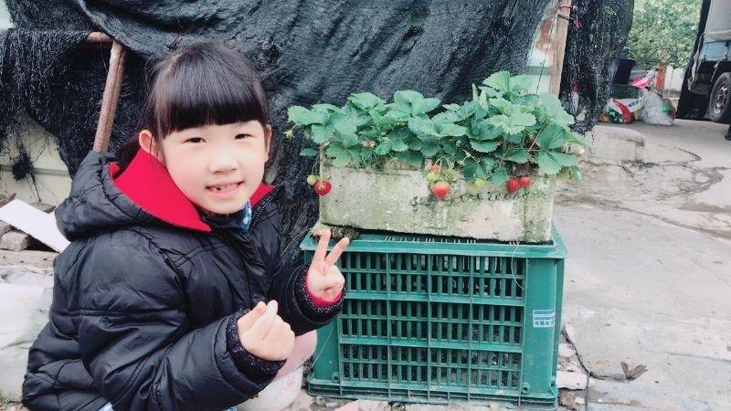 娘家媽媽知道小孩愛吃草莓,所以特別種了草莓, 初二回娘家就立刻帶小孩去採草莓, 真的是超幸福的~有媽媽的感覺真好^^ #回娘家