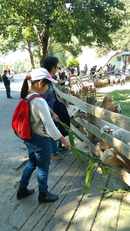過年到飛牛牧場看看可愛的牛和羊!!祝大家洋洋得意! #親子旅遊