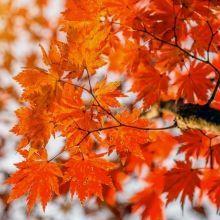 京都賞楓11、12月優缺點比較懶人包